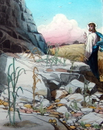 Parable of the Sower, some fell on stony ground